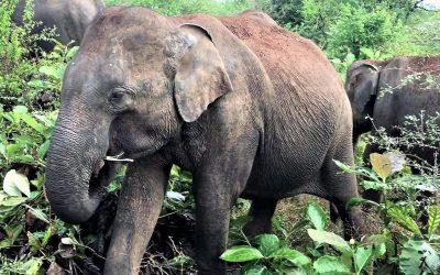 Der Weg zum Buch (3): Entscheidung in Sri Lanka