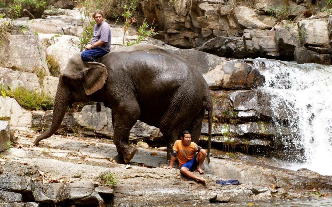 Mein Leben, meine Elefanten, mein Buch