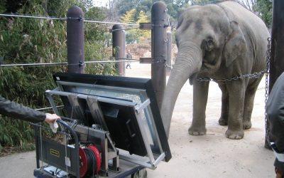 Asiatische Elefanten die besten Mathematiker im Tierreich